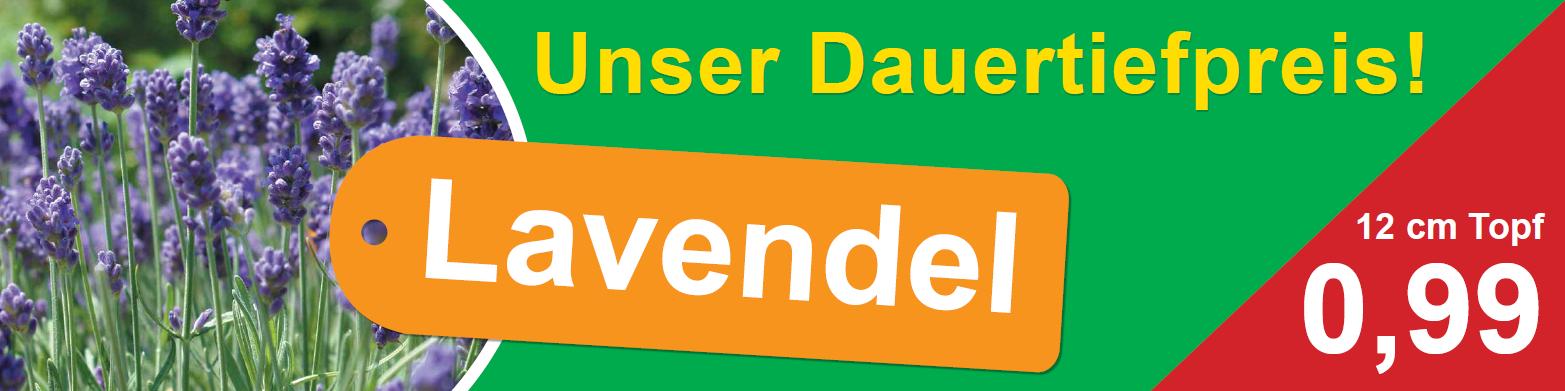 Lavendel-Dauertiefpreis_2.png